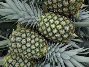 ananas plod