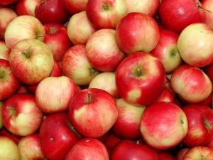 jablka_vitarianstvi